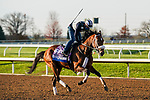 November 5, 2020: Owendale, trained by trainer Brad Cox, exercises in preparation for the Breeders' Cup Dirt Mile at Keeneland Racetrack in Lexington, Kentucky on November 5, 2020. Dan Heary/Eclipse Sportswire/Breeders Cup/CSM