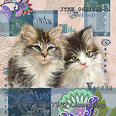 Isabella, REALISTIC ANIMALS, REALISTISCHE TIERE, ANIMALES REALISTICOS, paintings+++++,ITKE066165S-L,#a#, EVERYDAY ,cats ,collage