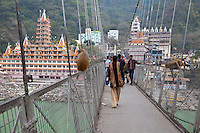 India, Rishikesh.  Baboons frequent the footbridge over the Ganges leading to the Tera Manzil Hindu Temple, on left.