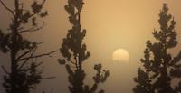 Sunrise in foggy Hayden Valley.