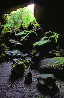 Moss covered rocks line the front of a Kaumana Cave near Hilo on the Big Island of Hawaii.