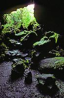 Moss covered rocks line the front of a Kaumana Cave near Hilo on the Big Island of Hawaii.