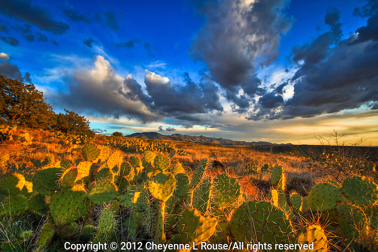 Aqua Fria Prickly Pear - Arizona - Agua Fria National Monument.