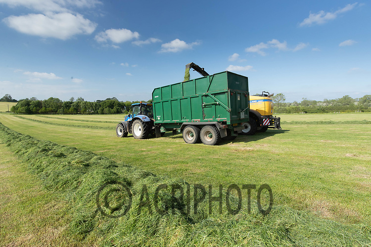 3-6-2021 Contractors chopping grass silage <br /> ©Tim Scrivener Photographer 07850 303986<br />      ....Covering Agriculture In The UK....