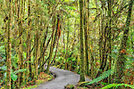 Bush track in forest near Lake Matheson, New Zealand