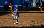 April 27, 2021: Travel Column, trained by trainer Brad Cox, exercises in preparation for the Kentucky Oaks at Churchill Downs on April 27, 2021 in Louisville, Kentucky. John Voorhees/Eclipse Sportswire/CSM