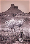 Thimble Butte with Two Yuccas, Arizona
