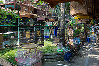 Yogyakarta, Java, Indonesia.  Birds for sale in the Bird Market.