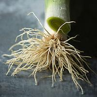 Poireaux bio // Organic leeks
