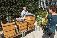 """Honigernte bei den Bundestags-Bienen.<br /> Oliver Krischer, """"Bienen-Vater"""" des Parlaments und Vizechef der Bundestagsfraktion der Gruenen erntete zusammen mit seinem Mitarbeiter Daniel Holstein und dem Imker Dr. Benedikt Polaczeck von der Technischen Universitaet, am Dienstag den 7. August 2018 im Paul-Loebe-Haus den Honig der Bundestagsbienen. Insgesamt wird eine Ernte von bis zu 100 Kilogramm von den drei Bienenvoelkern erwartet.<br /> Die Bienenvoelker wurden 2016 als Zeichen gegen das Bienensterben von der gruenen Bundestagsabgeordneten Baerbel Hoehn aufgestellt.<br /> Im Bild: Oliver Krischer an den drei Bienenvoelkern Sylvia, Katrin und Annalena (vlnr.).<br /> 7.8.2018, Berlin<br /> Copyright: Christian-Ditsch.de<br /> [Inhaltsveraendernde Manipulation des Fotos nur nach ausdruecklicher Genehmigung des Fotografen. Vereinbarungen ueber Abtretung von Persoenlichkeitsrechten/Model Release der abgebildeten Person/Personen liegen nicht vor. NO MODEL RELEASE! Nur fuer Redaktionelle Zwecke. Don't publish without copyright Christian-Ditsch.de, Veroeffentlichung nur mit Fotografennennung, sowie gegen Honorar, MwSt. und Beleg. Konto: I N G - D i B a, IBAN DE58500105175400192269, BIC INGDDEFFXXX, Kontakt: post@christian-ditsch.de<br /> Bei der Bearbeitung der Dateiinformationen darf die Urheberkennzeichnung in den EXIF- und  IPTC-Daten nicht entfernt werden, diese sind in digitalen Medien nach §95c UrhG rechtlich geschuetzt. Der Urhebervermerk wird gemaess §13 UrhG verlangt.]"""