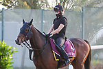 March 25, 2021: Gold Cup contender Spanish Mission trains on the track for trainer Andrew Balding at Meydan Racecourse, Dubai, UAE. Shamela Hanley/Eclipse Sportswire/CSM