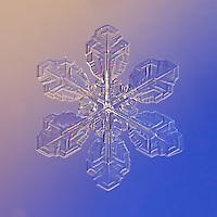 Snowflake Coralie - Macro photography image of a Stellar Plate Snowflake