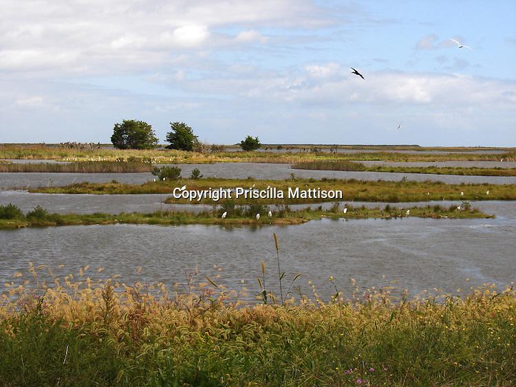 Galloway Township, New Jersey -  September 19, 2008:  Birds soar in the Edwin B. Forsythe National Wildlife Refuge.