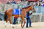 HOT SPRINGS, AR - APRIL 14: Oaklawn Handicap. Oaklawn Park on April 14, 2018 in Hot Springs,Arkansas. #6 Colonelsdarktemper (Photo by Ted McClenning/Eclipse Sportswire/Getty Images)