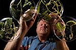 John Huisman organizing his algae specimens,