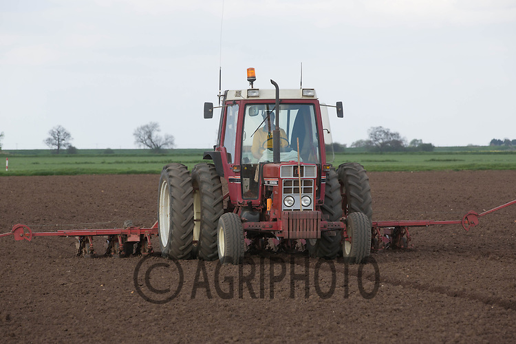 International 885XL drilling sugar beet in the Cambridgeshire fens<br /> Picture Tim Scrivener 07850 303986