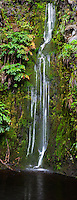 A waterfall deep within the lush forests of Koke'e State Park, Kaua'i.