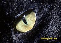 CT02-006z  Cat Eye