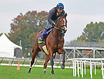 October 31, 2018 : Oscar Performance, trained by Brian Lynch, works 3 furlongs in preparation for the Breeders' Cup Mile at Churchill Downs on October 31, 2018 in Louisville, KY. Jessica Morgan/ESW/CSM