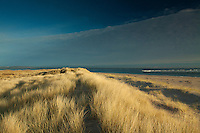 Sand Dunes at Abertay Sands, Tentsmuir Nature Reserve, Fife