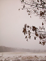 Withered leaves over snow covered field&#xA;<br />