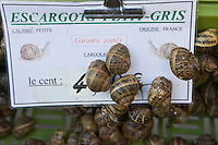 Europe/France/Languedoc-Roussillon/66/Pyrénées-Orientales/Perpignan: Madame Perez vend  des escargots petits gris vivants pour préparer la cargolade: Escargots du Roussillon
