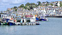 BNPS.co.uk (01202 558833)<br /> Pic: Jonathan Parr/BNPS<br /> <br /> Pictured: The seal in front of a small white boat (far right) in Brixham Harbour, in Devon.<br /> <br /> This is the moment a hapless skate fish looks resigned to its fate after being caught by a hungry seal.<br /> <br /> The flatfish is a bottom feeder and was unlucky to have been picked off by the grey seal which would have dived to the seabed to scoop it up.<br /> <br /> The aquatic mammal then brought its prey to the surface in Brixham Harbour in Devon.