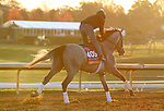 Harvey'S Lil Goil, trained by trainer William I. Mott, exercises in preparation for the Breeders' Cup Distaff at Keeneland Racetrack in Lexington, Kentucky on November 3, 2020.