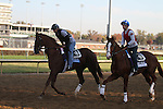 Dullahan, trained by Dale Romans and to be ridden by Julien Leparoux , and    .Shared Account, trained by Graham Motion and to be ridden by Edgar Prado .exercises in preparation for the 2011 Breeders' Cup at Churchill Downs on October 31, 2011.