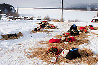Paul Gebhart's team rests in the sun at the village checkpoint of Ruby with the Yukon River in the background during the 2010 Iditarod