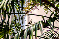 Milano, uccello e palma --- Milan, bird and palm tree
