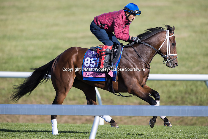 Aunt Pearl, trained by Brad Cox, exercises in preparation for the Breeders' Cup Juvenile Fillies Turf at Keeneland 11.03.20.
