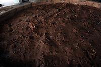 """El proceso para elaborar el mezcal artesanal de Santiago Matatlan es largo, ya que se cuenta desde el inicio en que se hace la plantación en los terrenos, con una espera de diez años aproximadamente hasta el momento de ya poder ofrecerlo al público. Pero es este proceso el que le da el sabor y la fama que ya tiene en todo el mundo. <br /> <br /> La materia prima utilizada en la elaboración del mezcal es el agave que recibe el nombre común de maguey y que pertenece a la familia Agavaceae. Se caracteriza por ser una planta suculenta perenne sin tallo o con tronco corto. Sus hojas se disponen en rosetas y tienen forma lanceolada (forma de lanza), rígidas, carnosas, acabadas en espina y con los márgenes dentados y espinosos. La zona donde reside la base de las hojas tiene el nombre de """"corazón"""" o """"piña"""". Posee inflorescencias en espigas o racimos situados sobre un largo escapo. El perianto tiene forma tubular con los estambres sobresaliendo a éste. Su fruto se encuentra en cápsula, con semillas negras achatadas.<br /> <br /> De la gran cantidad de especies de agave existentes, la especie utilizada para la elaboración de mezcal es la angustifolia Haw, comúnmente conocida como espadín. Como descripción general de esta planta, posee un tronco corto y hojas de 120 cm. de longitud y 10 cm. de anchura. Son de una coloración entre azul y verde pálido. Son cóncavas del haz y convexas del envés. Espina terminal de 3 cm. de longitud aproximadamente  y de color marrón oscuro. Su inflorescencia tiene una longitud de 3 a 5 m de longitud con flores de color verde-amarillento.<br /> <br /> Esta especie, sin embargo, no es la única utilizada. Otras especies que también son útiles para la obtención del mezcal son el agave ferox Koch, conocido comúnmente como salmiana, y el agave potatorum Zucc, conocido vulgarmente como tobalá, solo por mencionar algunos.<br /> <br /> Para la recolección de la materia prima (agave o maguey) son necesarias ciertas condiciones o características, tales com"""