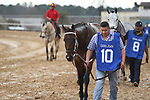 HOT SPRINGS, AR - FEBRUARY 19: Combatant #10, before the running of the Southwest Stakes at Oaklawn Park on February 19, 2018 in Hot Springs, Arkansas. (Photo by Justin Manning/Eclipse Sportswire/Getty Images)