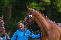 GBR-Arron Millar's RLE Nina Van Overis Z during the First Horse Inspection for the CCI-L3* Section B.  2019 GBR-Saracen Horse Feeds Houghton International Horse Trial. Wednesday 22 May. Copyright Photo: Libby Law Photography