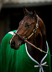 DEL MAR, CA - NOVEMBER 01: Bolt d'Oro in portrait at Del Mar Thoroughbred Club on November 01, 2017 in Del Mar, California. (Photo by Alex Evers/Eclipse Sportswire/Breeders Cup)