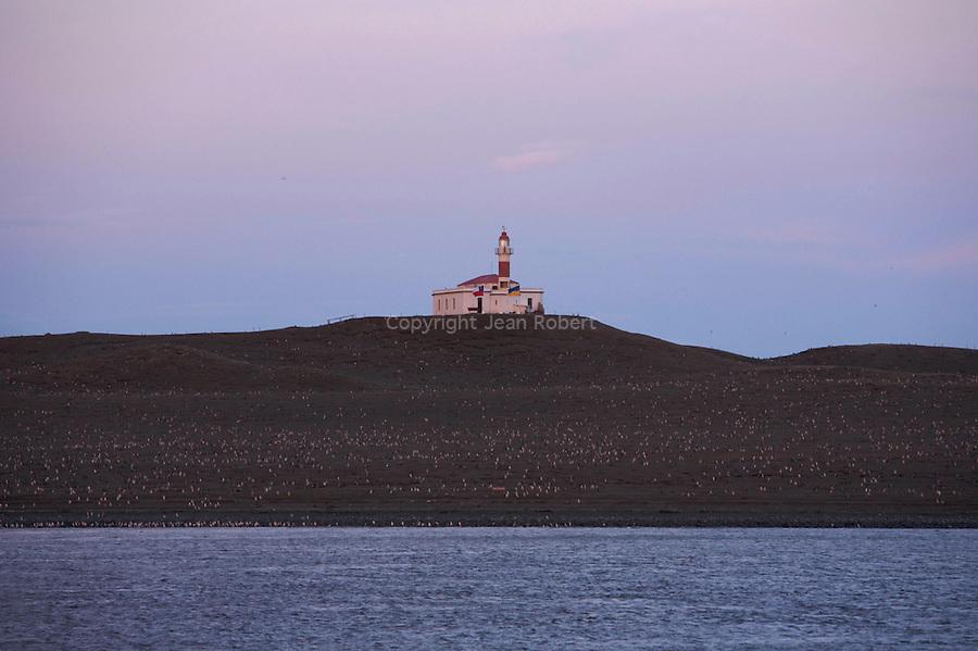 Pendant l'été austral, plus de 65 0000 couples de manchot de Magellan viennent se reproduire sur l'ile de Magalena à quelques encablures de Punta Arenas, capitale de la patagonie chilienne..Magdalena island nearby Punta Arenas.65 000 couples of Magellan penguins live on this island.during summer