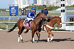 February 21, 2015: Silverpocketsfull on post parade before the start of the Davona Dale Stakes(G2). Gulfstream Park, Hallandale Beach (FL). Arron Haggart/ESW/CSM
