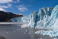 Chenega glacier calves ice into Prince William Sound, Alaska.