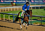 LOUISVILLE, KY - APRIL 29: Reride, trained by Steve Asmussen, exercises in preparation for the Kentucky Derby at Churchill Downs on April 29, 2018 in Louisville, Kentucky. (Photo by John Voorhees/Eclipse Sportswire/Getty Images)