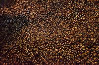 Roasted coffee beans in the process of cooling, Kaleo's Koffee, Pua'a Kea Farm, Pa'auilo, Hamakua Coast, Big Island.