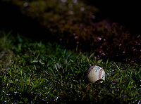 Rawlings Official Major League Baseball sits in the grass outside the field during a Calvary Christian Warriors game against the Lakeland Christian Vikings on February 27, 2021 at Calvary Christian High School in Clearwater, Florida.  (Mike Janes/Four Seam Images)