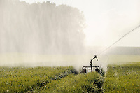 Germany farm irrigation in grain field / DEUTSCHLAND Bewaesserungsanlage im Getreidefeld