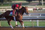 OCT 27 2014:Kaigun, trained by Mark Casse, exercises in preparation for the Breeders' Cup Mile at Santa Anita Race Course in Arcadia, California on October 27, 2014. Kazushi Ishida/ESW/CSM