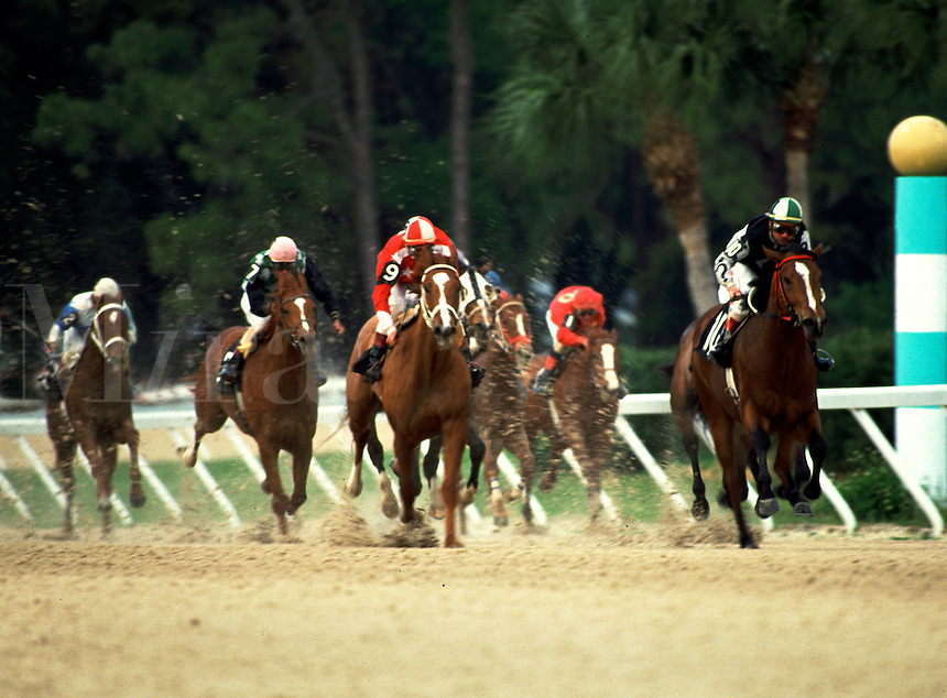 Thoroughbred racing at Tampa Bay Downs, FL