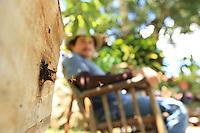 Stingless Tetragona ziegleri bees flying to their hive.///Abeilles sans dard Tetragona ziegleri volent vers leur ruche.