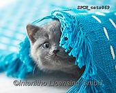 Xavier, ANIMALS, REALISTISCHE TIERE, ANIMALES REALISTICOS, cats, photos+++++,SPCHCATS869,#a#, EVERYDAY