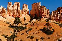 red, orange and white hoodoos, aka tent rocks, fairy chimneys, and earth pyramids, Bryce Canyon National Park, Utah, USA
