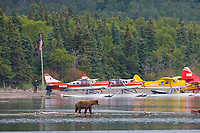 Tourists view bears by float planes at the shore of Naknek Lake, Brooks Lodge, Katmai National Park, Alaska