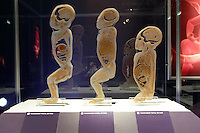 NO FEE PICTURES.1/2/12 A foetus at the opening of The Human Body Exhibition—an all new exhibition featuring more than 200 full and partial real human body specimens, makes its world debut at The Ambassador Theatre this Spring. This incredible exhibition showcases carefully dissected specimens to provide a window into the miraculous way the body functions and gives visitors the opportunity to see exactly what lies beneath their skin. The Human Body Exhibition today Thursday 02 February, 2012 at The Ambassador Theatre for a limited engagement. Picture:Arthur Carron/Collins